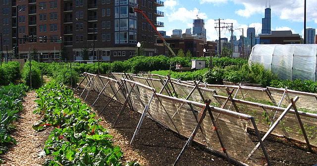 640px-New_crops-Chicago_urban_farm