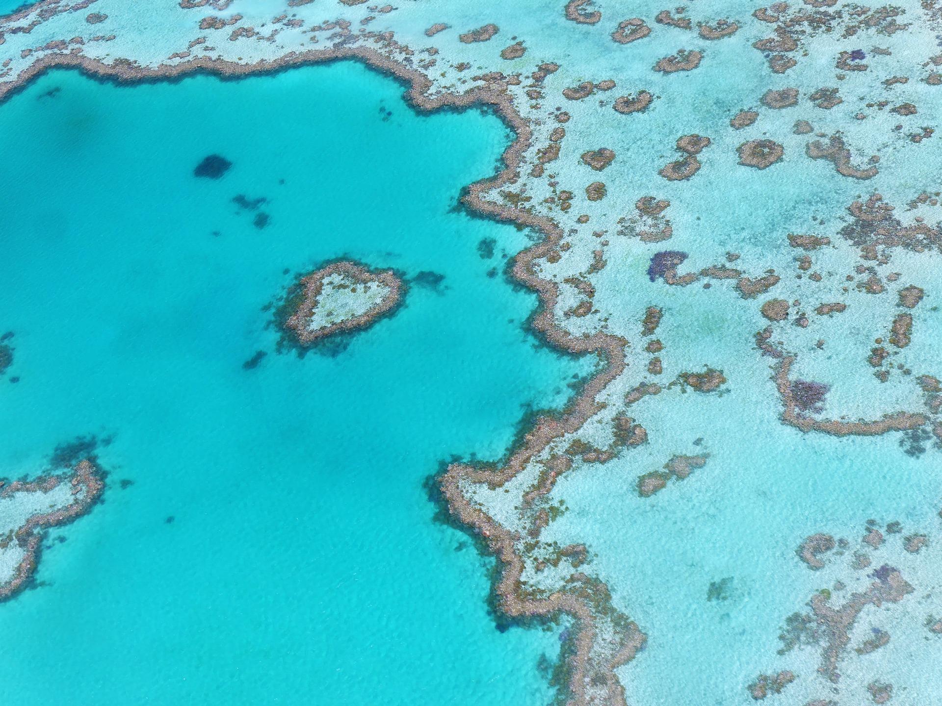 Heart Reef Australia Great Barrier Reef